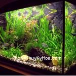 aquarium-design-2